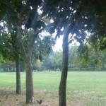 im Park (6)
